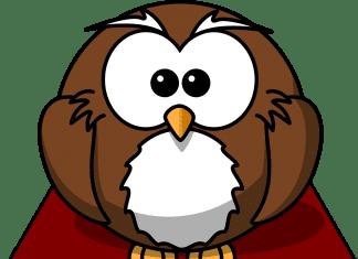 Owl on a book