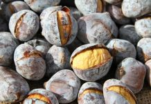 Chestnuts Food Waste Recycling